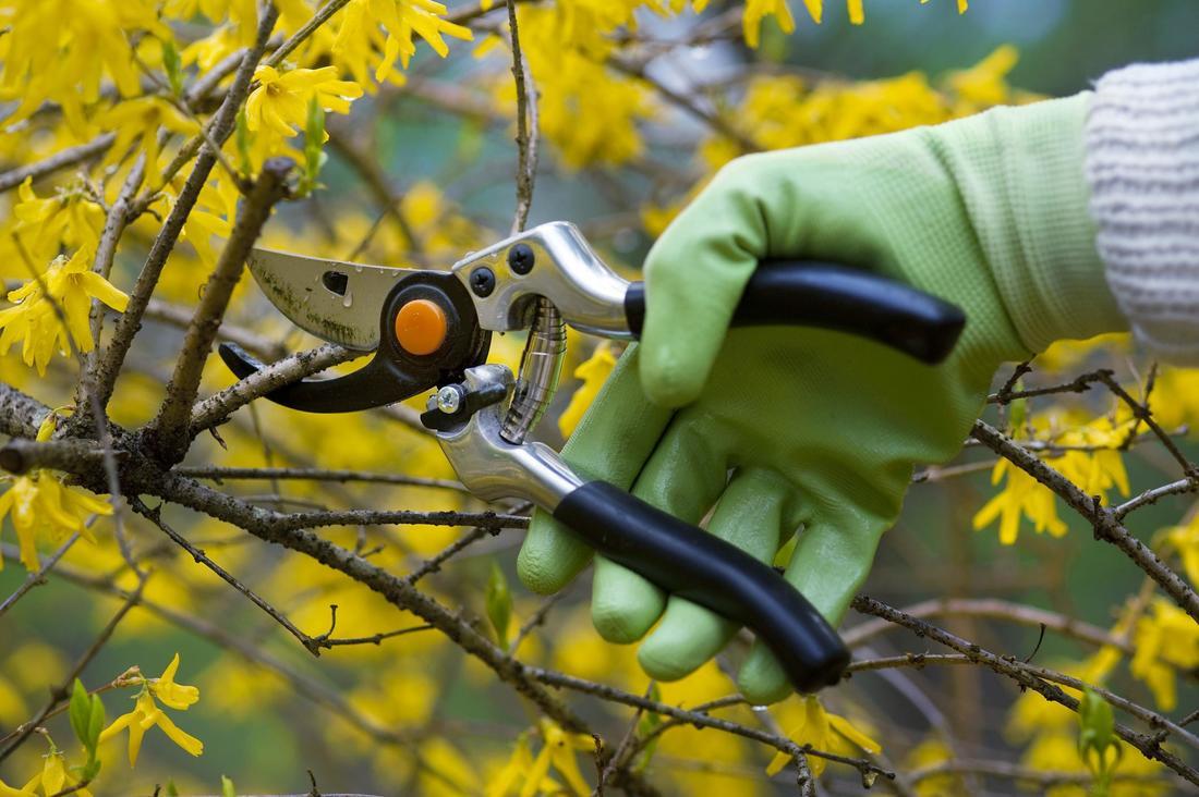 Tree pruning Sydney